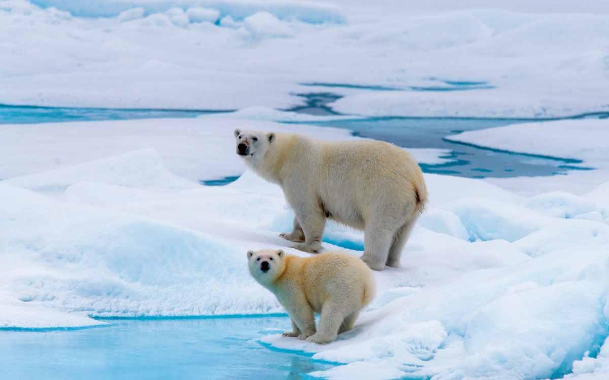 Keep an eye out for Polar bears in the Arctic