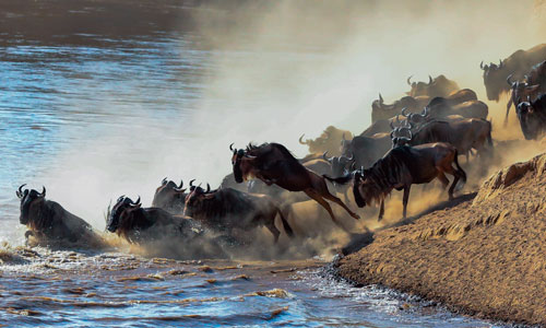Watch the wildebeest migration at Serengeti National Park