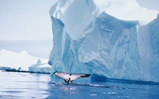 Whale tail, Antarctica