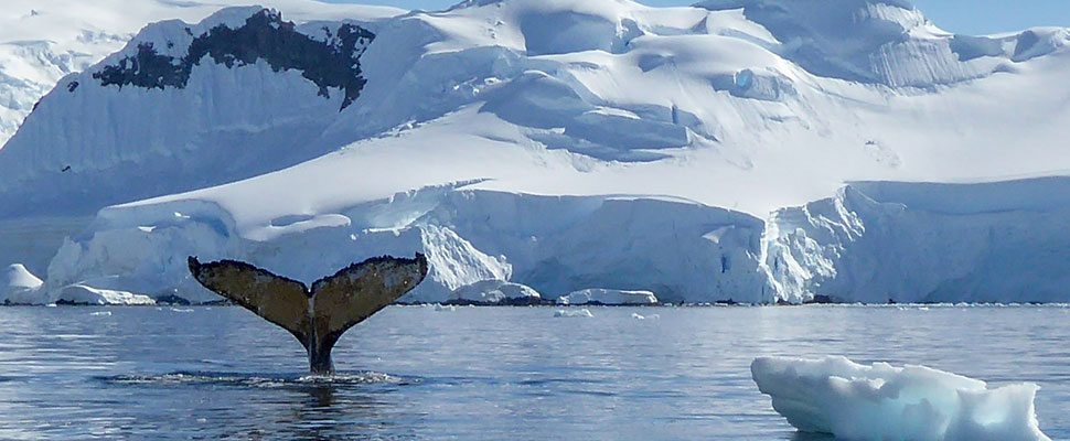 Whales and more in Antarctica